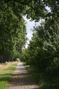 Un camí recte, envoltat d'arbres, sense que es vegi el final