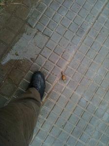 Un cargol d'uns déu centímetres al costat del meu peu dret, sobre el carrer mullat.