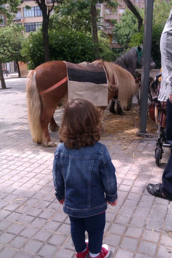 Cavall petitó!