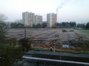 La pastura què acaben d'abonar, allí hi ha més clapes de terra i es nota més.