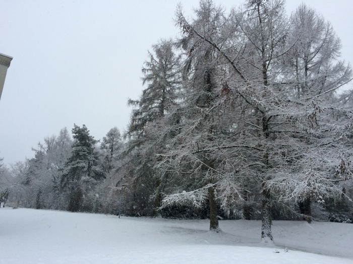 Els arbres del carrer coberts de neu