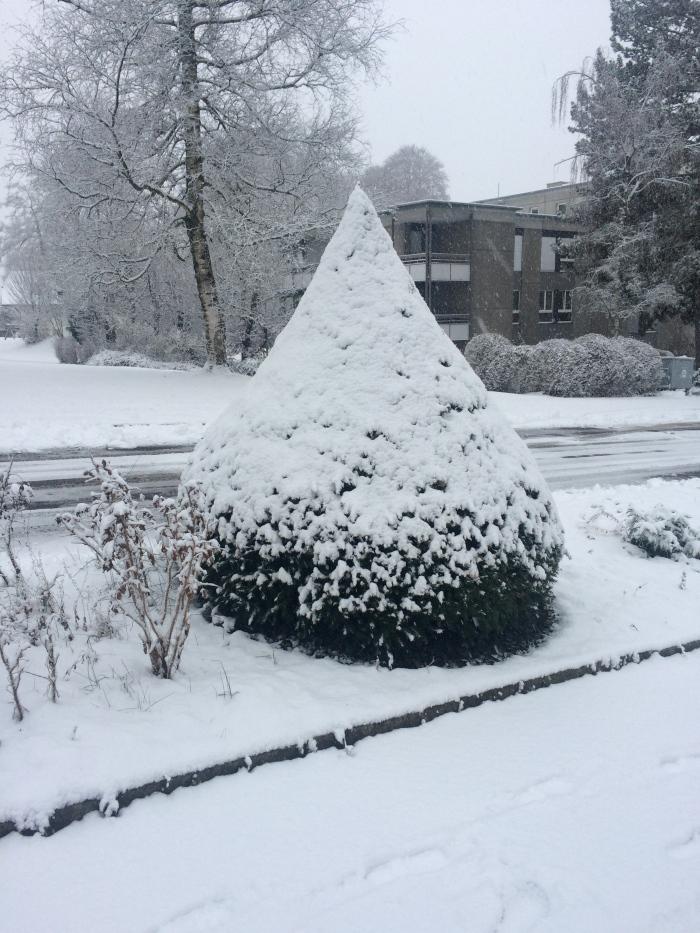 Un arbust completament cobert de neu