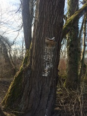 fongs_arbre