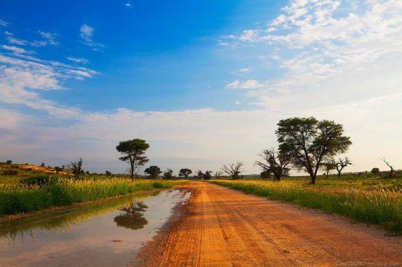 Paissatge d'un pla a Sudàfrica, amb cel assolellat i arbres dispersos.
